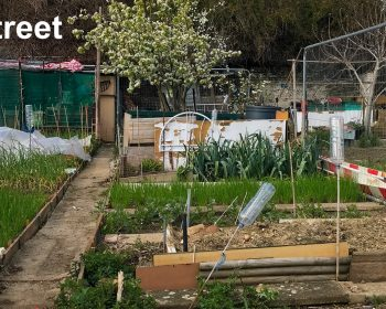 Allotments Purdy Street London E3